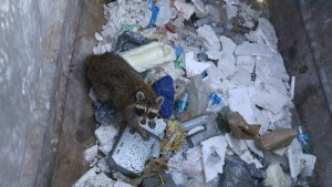 Wildlife in the city impacts Deltech Furnaces